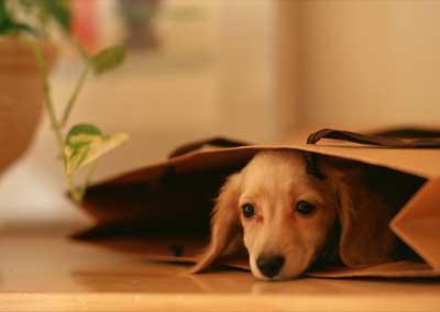 狗狗厌食是为什么